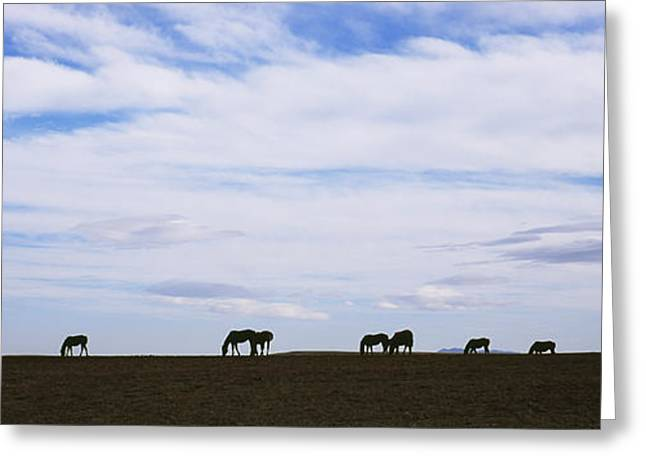 Silhouettes Of Horses Greeting Cards - Silhouette Of Horses In A Field Greeting Card by Panoramic Images