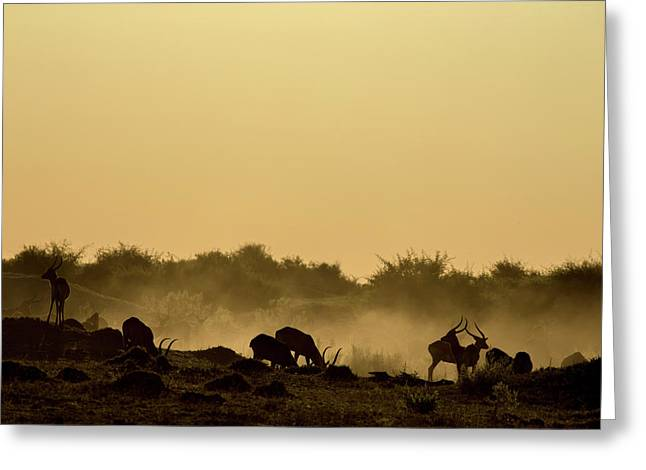 Silhouette Of Lechwe, Kobus Leche Greeting Card by Beverly Joubert