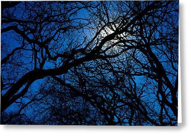 Quercus Greeting Cards - Silhouette Of Oak Trees, Texas, Usa Greeting Card by Panoramic Images