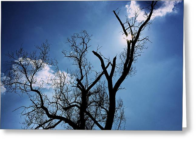 The Trees Photographs Greeting Cards - Silhouette of old tree branches against blue sky backlit Greeting Card by Bernard Jaubert