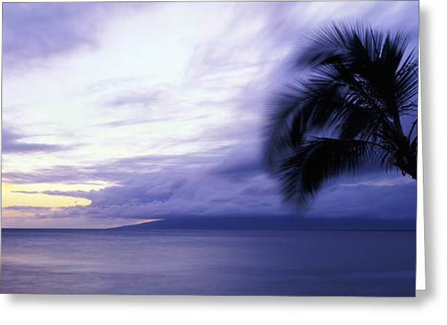 Panoramic Ocean Greeting Cards - Silhouette Of Palm Trees, Maui, Hawaii Greeting Card by Panoramic Images