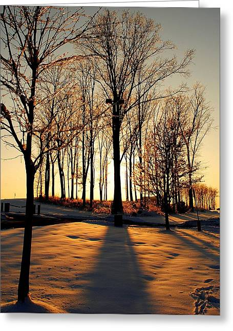 Walnut Tree Photograph Greeting Cards - Silhouette of trees and Ice Greeting Card by Frozen in Time Fine Art Photography