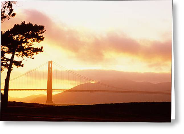 San Francisco Bay Greeting Cards - Silhouette Of Trees At Sunset, Golden Greeting Card by Panoramic Images