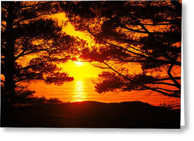 Big Sur Greeting Cards - Silhouette Of Trees On The Coast, Big Greeting Card by Panoramic Images