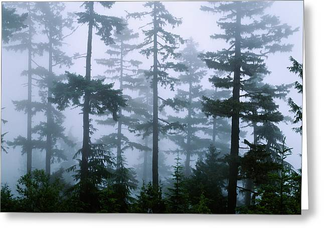 Douglas Fir Trees Greeting Cards - Silhouette Of Trees With Fog Greeting Card by Panoramic Images