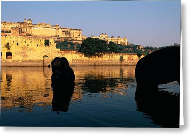 Jaipur Greeting Cards - Silhouette Of Two Elephants In A River Greeting Card by Panoramic Images