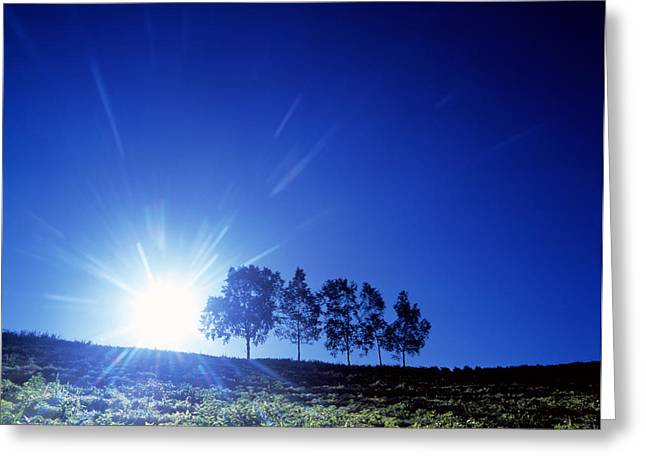 New Beginnings Greeting Cards - Silhouette With Trees In Sparse Field Greeting Card by Panoramic Images