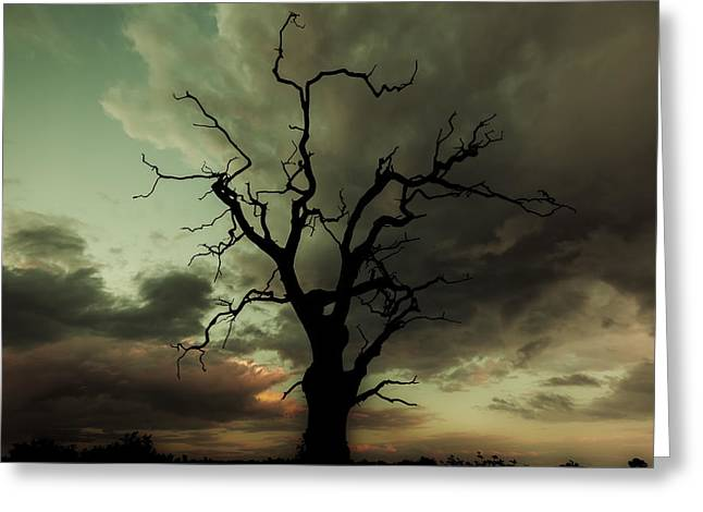 Rural Winter Greeting Cards - Silhouetted Greeting Card by Chris Fletcher
