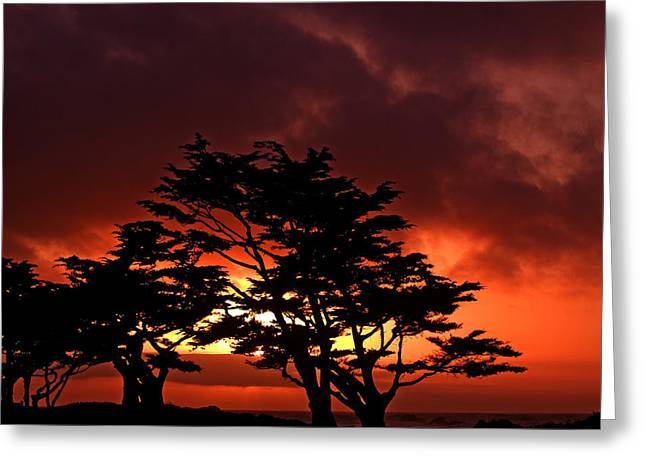 Bill Gallagher Greeting Cards - Silhouetted Cypresses Greeting Card by Bill Gallagher