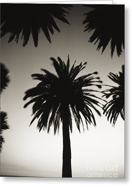 Black Top Greeting Cards - Silhouetted palm tree centered between other palm tree tops at dusk _black and white photograph_ Greeting Card by Robert Sablan