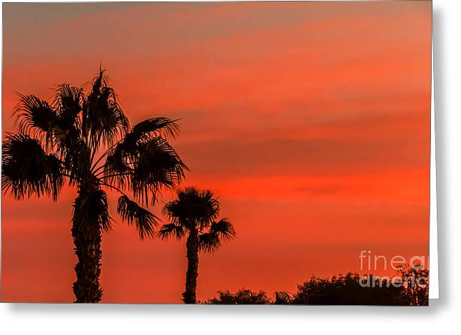 Bale Greeting Cards - Silhouetted Palm Trees Greeting Card by Robert Bales