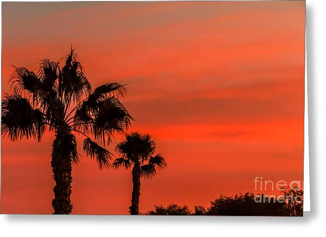 Yuma Greeting Cards - Silhouetted Palm Trees Greeting Card by Robert Bales