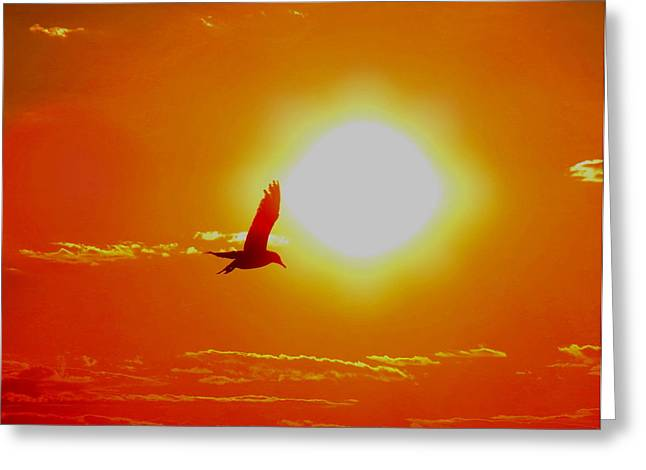 Silhouetted Seagull  Greeting Card by Stephen Melcher