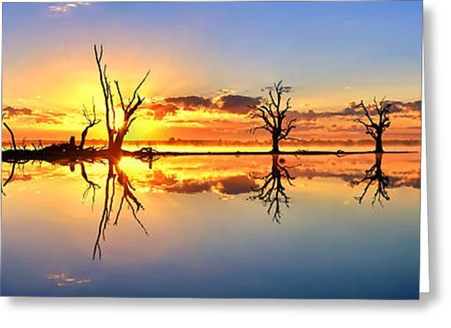 Calm Water Reflection Greeting Cards - Silhouetted Sential Sunset Greeting Card by Bill  Robinson