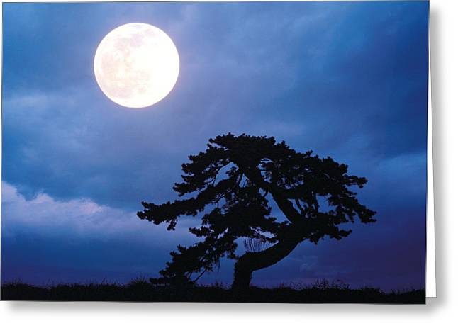 Single Tree Greeting Cards - Silhouetted Tree With Full Moon In Sky Greeting Card by Panoramic Images