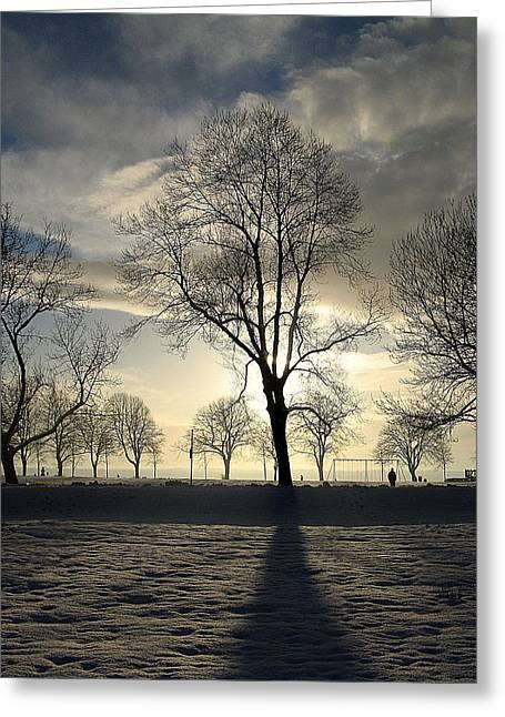Snow Tree Prints Greeting Cards - Silhouettes and a Long Winter Shadow  Greeting Card by Brian Chase