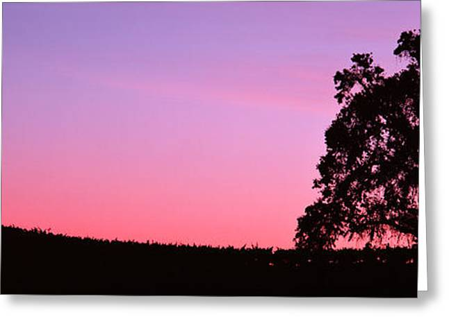 Silhoutte Of Oaktree In Vineyard, Paso Greeting Card by Panoramic Images