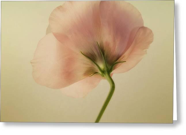 Tenderness Greeting Cards - Silk Greeting Card by Priska Wettstein
