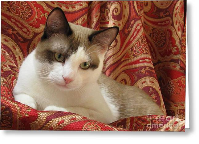 Pictures Of Cats Greeting Cards - Kitten SilkTapestryCatsTM Beauty  Antonio Paisley Red Gold Chocolate White Green Eyes Greeting Card by Pamela Benham