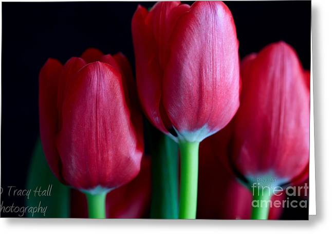 Silky Smooth Tulips Greeting Card by Tracy  Hall