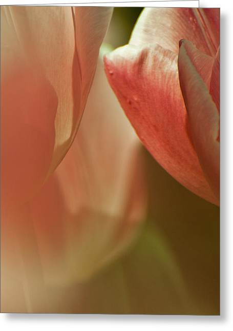 Pinks And Purple Petals Greeting Cards - Silky Soft Greeting Card by Jani Freimann