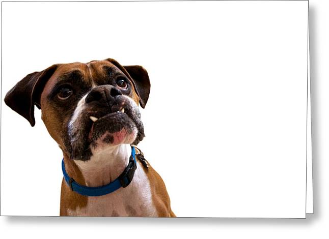 Fawn Boxer Greeting Cards - Silly Boxer Dog Greeting Card by Stephanie McDowell