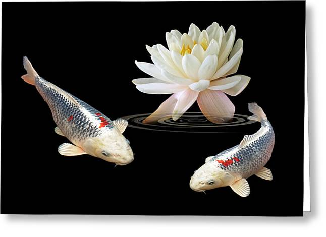 White Waterlily Greeting Cards - Silver And Red Koi With Water Lily Greeting Card by Gill Billington