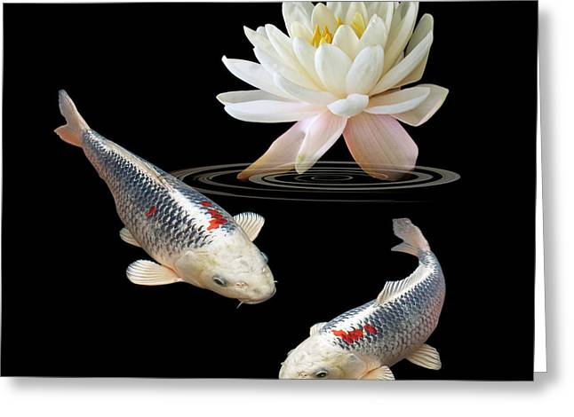 White Waterlily Greeting Cards - Silver And Red Koi With Water Lily Square Greeting Card by Gill Billington