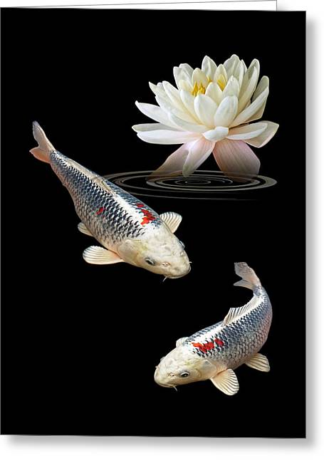 White Waterlily Greeting Cards - Silver And Red Koi With Water Lily Vertical Greeting Card by Gill Billington