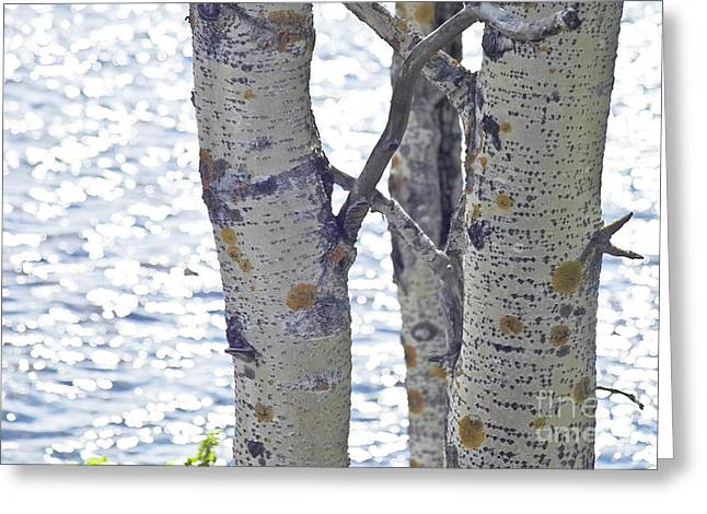 Heiko Koehrer-wagner Greeting Cards - Silver birch trees at a sunny lake Greeting Card by Heiko Koehrer-Wagner