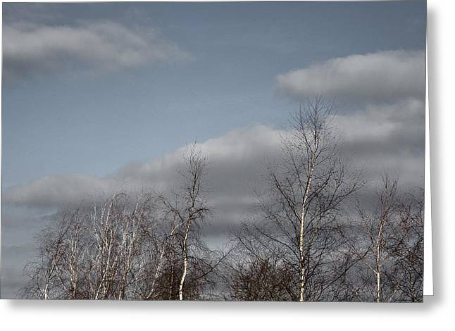Silber Greeting Cards - Silver Birch Greeting Card by Wolf Kettler