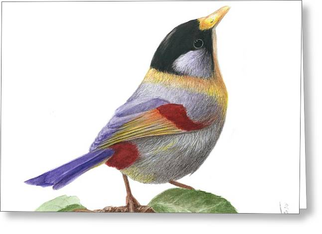 Silver-eared Mesia Greeting Card by Bruce Lennon