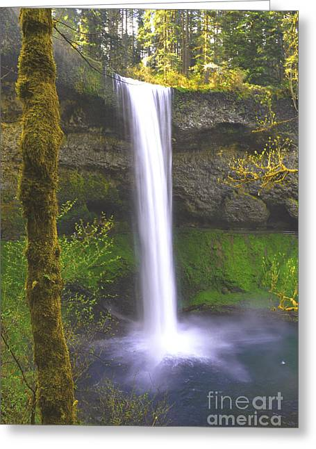 Silver Posters Greeting Cards - Silver Falls Forest Greeting Card by Andrea Hazel Ihlefeld