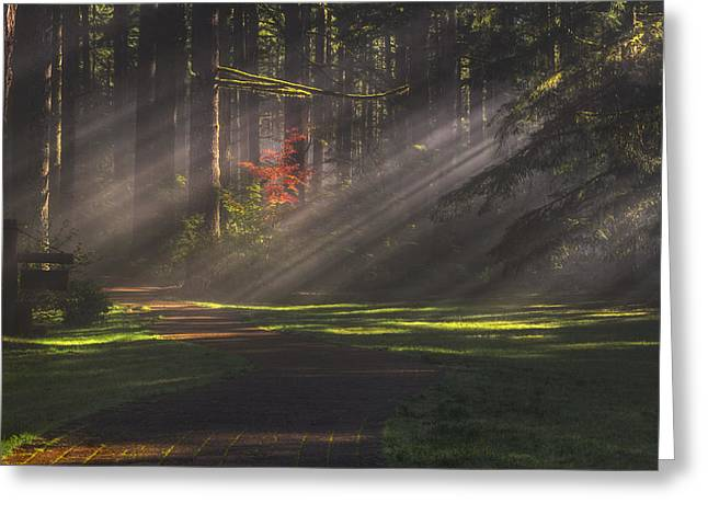 Light Beams Greeting Cards - Silver Falls Historic District Greeting Card by Mark Kiver