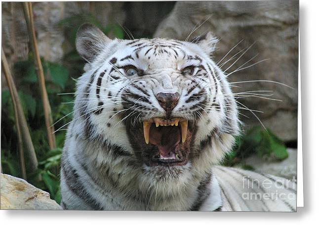 Gingrich Photo Greeting Cards - Silver - Fangs 7980 Greeting Card by Gary Gingrich Galleries