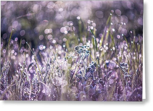 Silver Grass 1. Small Natural Wonders Greeting Card by Jenny Rainbow