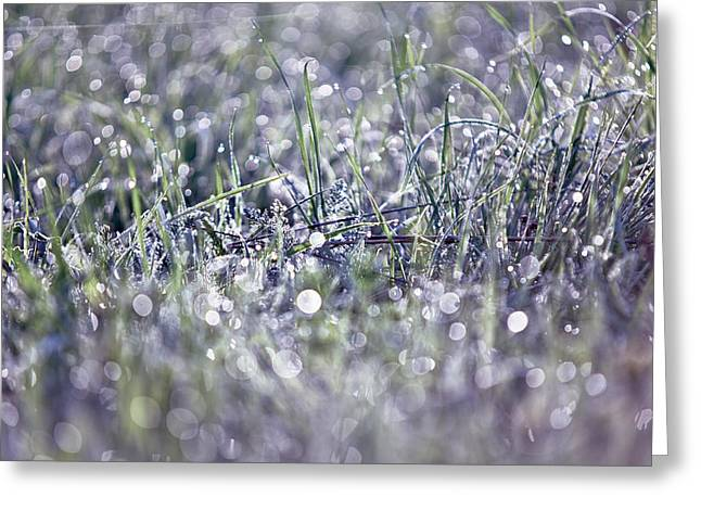 Silver Grass. Small Natural Wonders Greeting Card by Jenny Rainbow