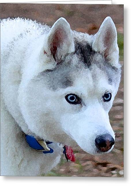 Husky Greeting Cards - Silver Husky with Blue Eyes Greeting Card by May Finch