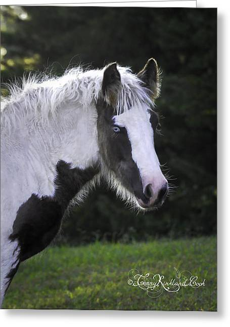 Gypsy Vanner Horse Greeting Cards - Silver Lace Greeting Card by Terry Kirkland Cook