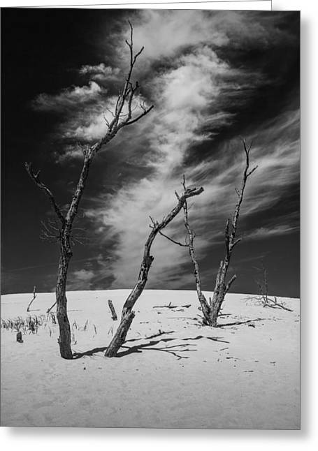 Blue Sky And Sand Greeting Cards - Silver Lake Dune with Dead Trees and Cirrus Clouds in Black and White Greeting Card by Randall Nyhof