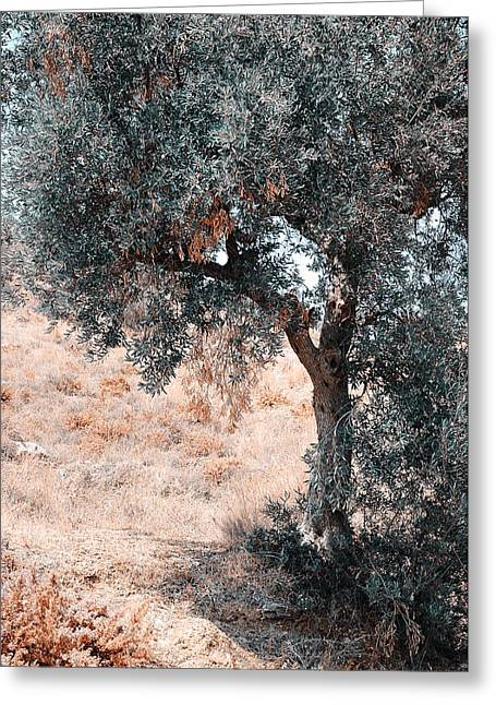 Olive Skin Greeting Cards - Silver Olive Tree. Nature in Alien Skin Greeting Card by Jenny Rainbow
