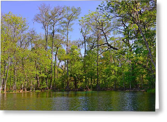 Fine Arts Greeting Cards - Silver River Florida Greeting Card by Christine Till
