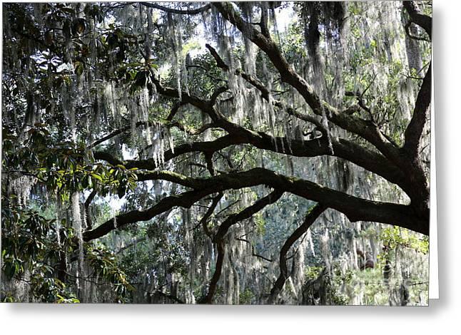 Mossy Trees Greeting Cards - Silver Savannah Tree Greeting Card by Carol Groenen