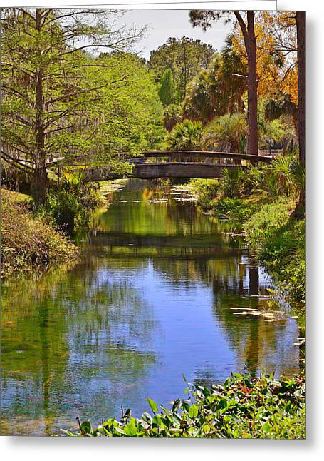 Tropical Plants Greeting Cards - Silver Springs Florida Greeting Card by Christine Till