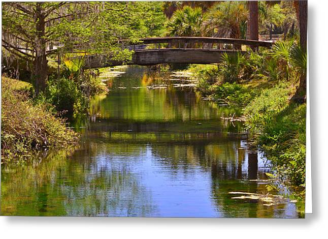 Silver Springs Florida Greeting Card by Christine Till