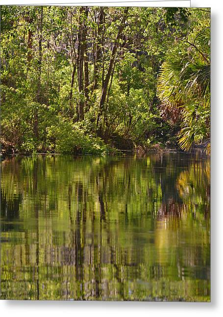 Silver Springs Nature Park Florida Greeting Card by Christine Till