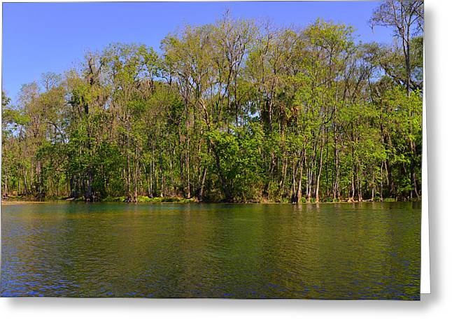 Paradise Greeting Cards - Silver Springs - Old-style Florida Greeting Card by Christine Till