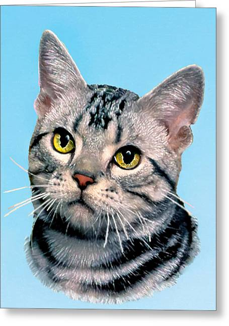 Ebay Greeting Cards - Silver Tabby Kitten Greeting Card by  Bob and Nadine Johnston