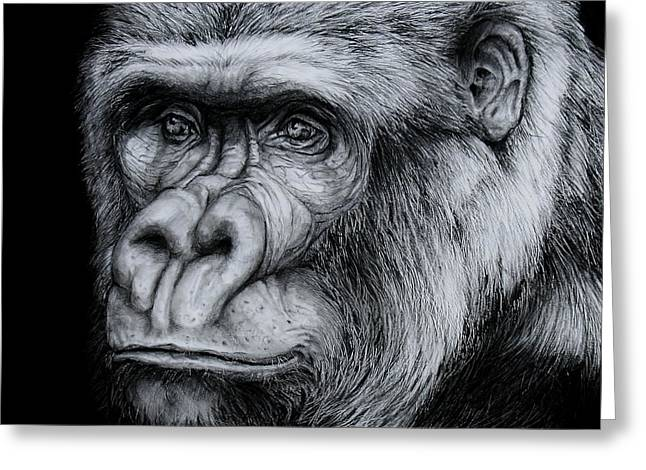 Gorilla Drawings Greeting Cards - Silverback - A Drawing Greeting Card by Jean Cormier