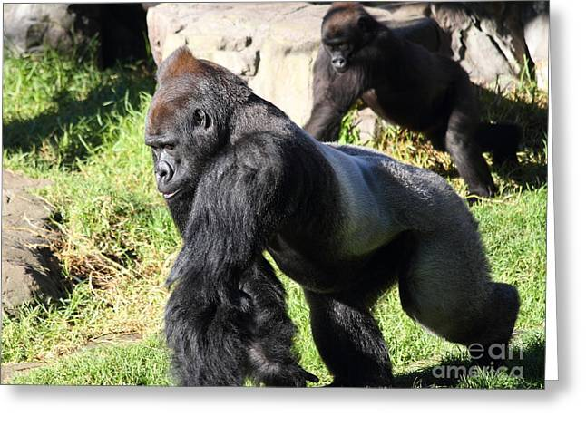 Ape Digital Greeting Cards - Silverback Gorilla 7D27234 Greeting Card by Wingsdomain Art and Photography